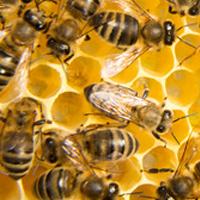 Une ruche qui attend votre implication