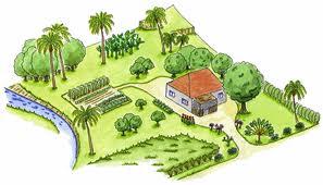 Réhabilitation de jardins créoles en Martinique