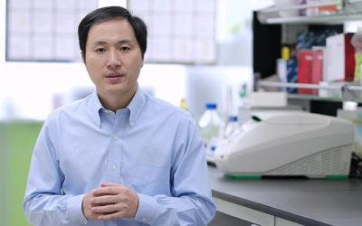 La Chine avait ses pandas, elle a désormais ses bébés OGM