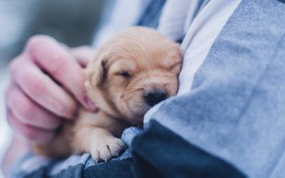 On a accueilli un chien guide d'aveugle