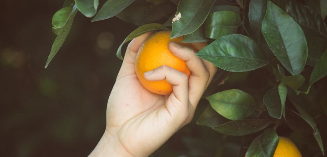 Falling Fruit : une carte comestible pour apprendre à glaner