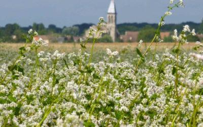 Économie vivante : la culture du blé noir en Bretagne