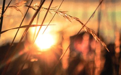 Quelles agricultures pour faire vivre notre territoire ?