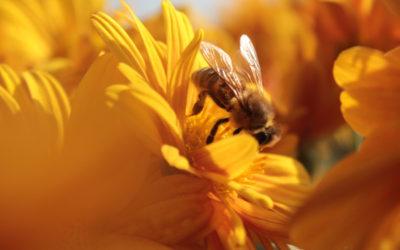 Bee Friendly : les pollinisateurs vous disent merci