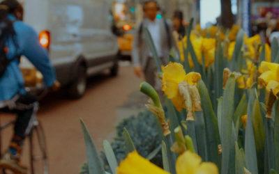 J'ai décidé de fleurir ma rue  #Témoignage