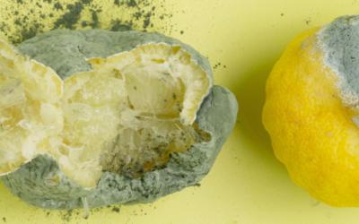 Lutter contre le gaspillage alimentaire : quelques idées
