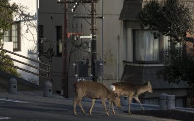 Zoocities – des animaux sauvages dans la ville #Vidéo