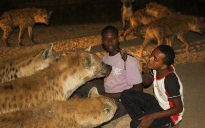 La cité des hyènes : Harar, en Éthiopie