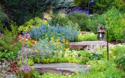 Les jardins de pluie : un solution contre les inondations