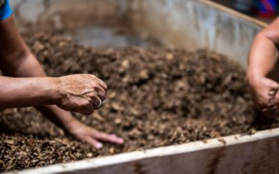Compost : trucs et astuces
