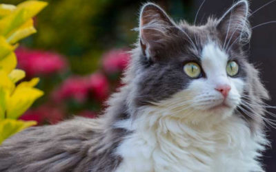 Le chat adulé et honni