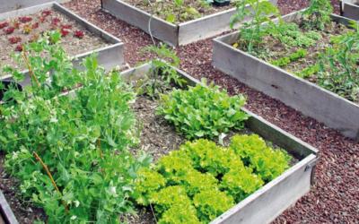 Grâce au jardin : une ferme d'insertion agro-écologique