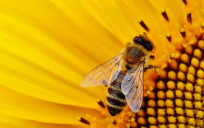 Les services offerts par la nature : problématique de la pollinisation