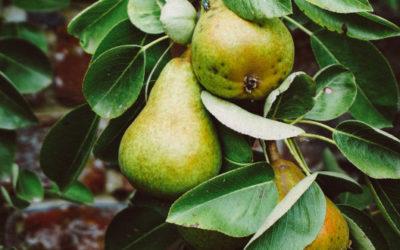 Le fruit royal #ChroniquePotagère